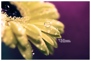 178 - Water Drop by gerrish