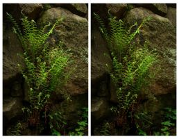 3D.fern - crossview by yatu-ex