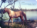 HP Assateague Pony #1 by xsoulstar