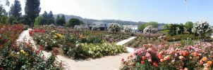 Rose Garden Panorama 2 by ShipperTrish
