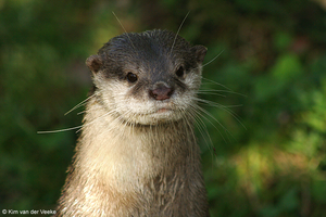 otter by Pherios