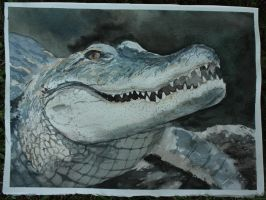 croc watercolor by cheesefreeak