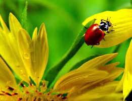 Lady bug and flower by andie252