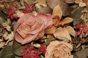 dried flowers 1 by beef-stalk