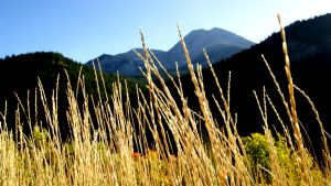 Mountain Grass by PapaGue
