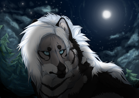 Fur Under The Night Sky by MissAntura