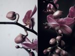Orchid by Plasticmoo