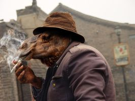 Smoking Camel by solkee