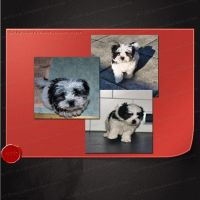 3 cute puppy stock images by M10tje