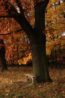 Autumn Bench. by GreenSlOw
