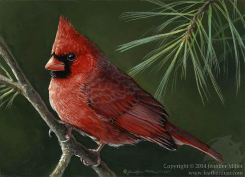 Cardinal and White Pine by Nambroth