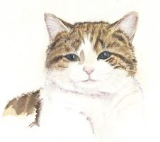 Larry the No 10 Cat by divamentalis