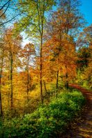 Autumn remembrance IV by Aenea-Jones