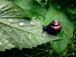Good morning, snail by Tainedis-Noy