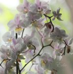 Orchids galore by 1001G