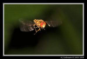 Hover Fly II by andy-j-s