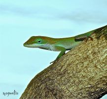 Sweet Anole by FallOut99