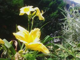 Yellow Flower (5) by LMW-The-Poet