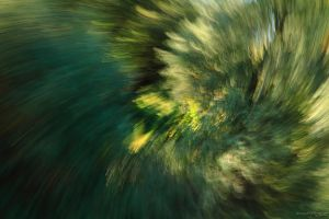 Dancing Forest I - Abstract of a Falling Leaf by HoremWeb
