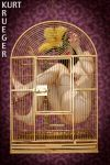 Birdcage Series - Dove Tailed Love Bird by KurtKrueger
