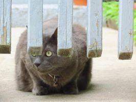 Peek-a-Boo From Under the Fence by Kitteh-Pawz