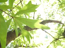 The light of the leaf by GriffinPhillis