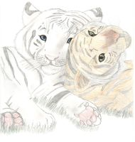 Tigers by mightpup