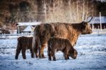 Family by AndersStangl