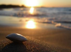 seashell. by kipakapa
