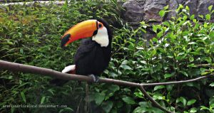 Belfast Zoo-Toucan by GrafixGirlIreland