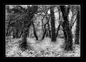 Enchanted Forest by neoweb