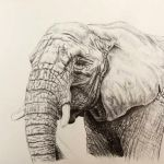 Elephant by remanere