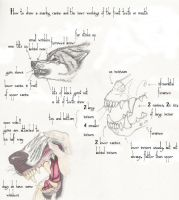 Wolf teeth how-to by ebydae