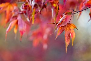 Autumn colours 2 by AngiWallace