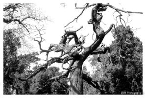 Naked Dancing Tree by lennerose