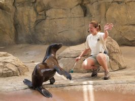 Teaching a Sea Lion tricks by multigal