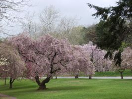 Branch Brook Park Spring by jswis by jswis