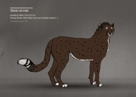 Shedu cat female 170 by Templado