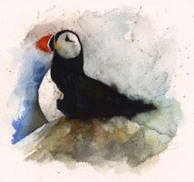 Puffin by Duffzilla