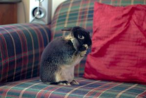 My Bunny Rabbit Cleaning His Ears by AwakeNight