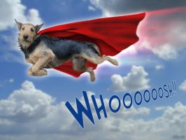 Super Russell Hound by wiledog