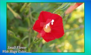 Huge Color - Very Small Flower by Taures-15