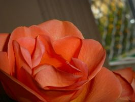 rosey red by mackyster