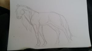 Horse scetch by Aylany