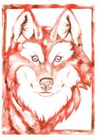 Red wolf by Kattvalk
