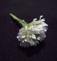 little white flowers Stock 3 by SimplyBackgrounds