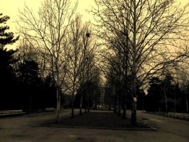 Trees by Oxidizer25