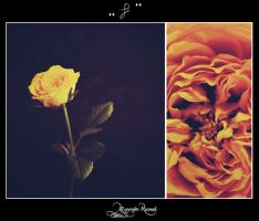 rose12 by pure52hart