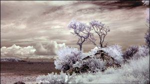 Koh Larn Wild Beach infrared by MichiLauke
