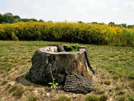 Tree Stump stock 5 by FairieGoodMother